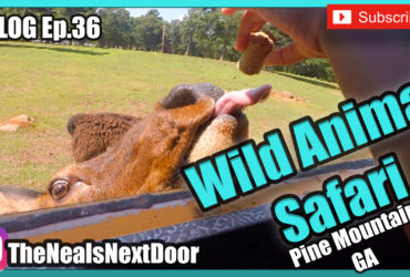 Ep. 36 – Wild Animal Safari